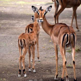 Espera el zoológico de Chapultepec a un nuevo inquilino