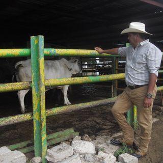 La aplicación de la inseminación constituye una de las deudas de la ganadería en Camagüey
