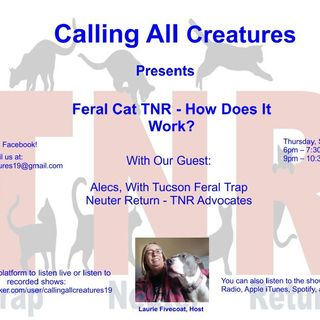 Feral Cat TNR - How Does It Work?