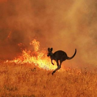 Bushfires: our past, present and possible future