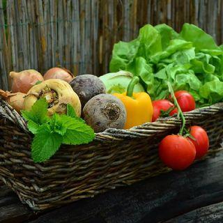 Alimentos sin NUTRIENTES  (El Lucrativo negocio de las semillas híbridas)