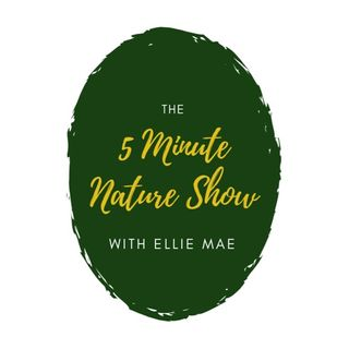 5 Minute Nature Show Ep 012 National Pollinator Week