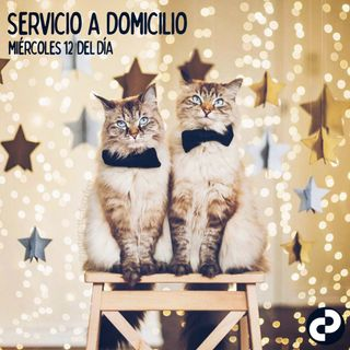 Servicio a domicilio 67