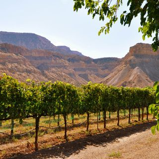 Visit Palisade and a surprise Colorado grape: Graciano