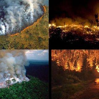 NUESTRO OXÍGENO Incendio en el Amazonas - Ing. Freddy Adalberto Martínez