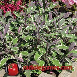 Les fines herbes, des plantes pour charmer vos papilles gustatives!