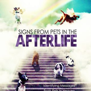 Onebuckley Radio Show Signs Pets Afterlife