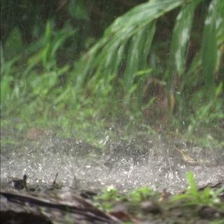 Meditación con sonidos de lluvia