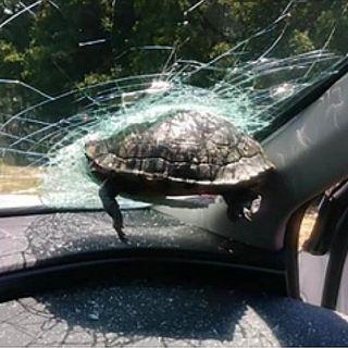 Erase una Tortuga Voladora