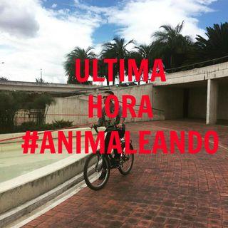 Ultima hora, maltrato animal en Bogotá
