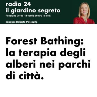 2.0 Forest bathing. La terapia degli alberi nei parchi di città. Roberta Pellegatta di Radio24 intervista Marco Nieri