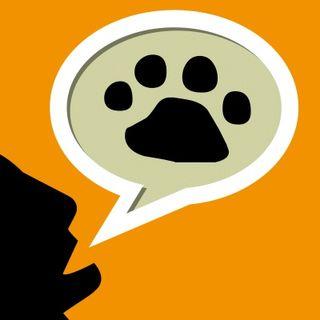 145 - Consejos para recibir a un cachorro