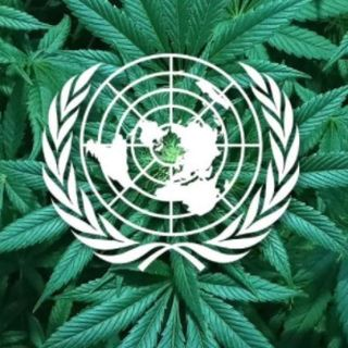 L'Onu e la cannabis, svolta epocale