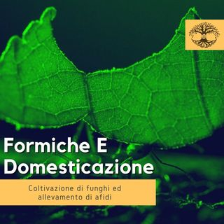 Formiche e Domesticazione di Funghi ed Afidi (Rubrica Etologica) - Comportamento Animale