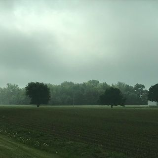 Climate change, quali sono gli alberi migliori per mitigarlo? Ce lo dice il suolo