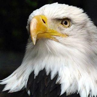 La visión de las águilas