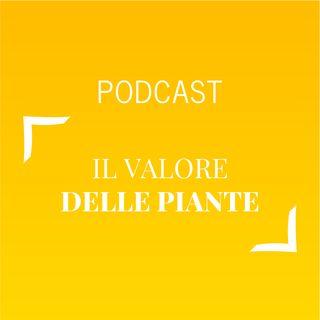 #461 - Il valore delle piante | Buongiorno Felicità!