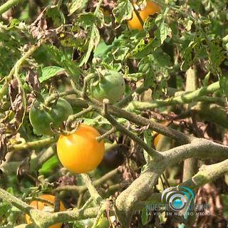 NUESTRO OXÍGENO Jardín comestible - Maestro jardinero Dagoberto Ortega