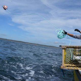Aaron Beswick on Moderate Livelihood Fishery