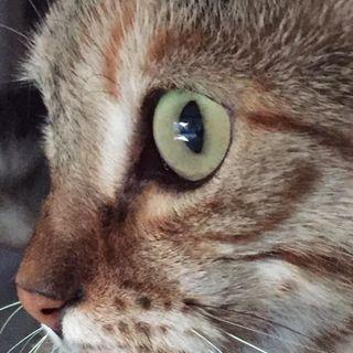I sensi del gatto