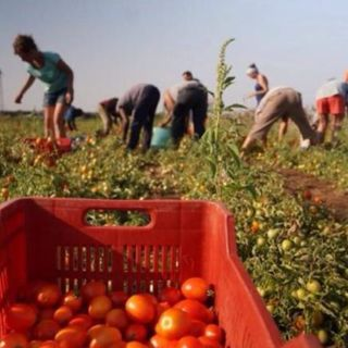 18 000 visas pour le travail saisonnier.
