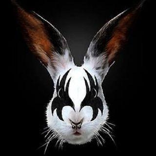 Spiral Rabbit