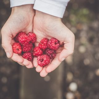 Wild Berries and Foraging - The Next Generation Show