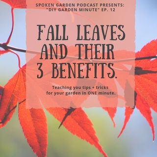 DIY Garden Minute Ep12 - Fall Leaves & Their 3 Benefits