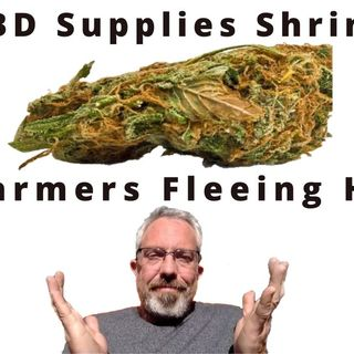 Are CBD Supplies Shrinking & Farmers Fleeing Hemp?