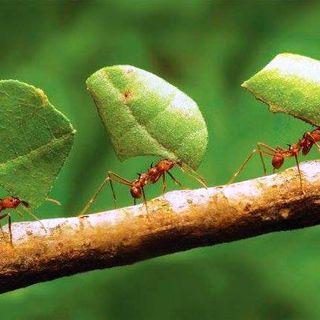NUESTRO OXÍGENO Hormigas e insectos - Inge Armbrecht