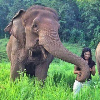 La colombiana que libera elefantes en Tailandia