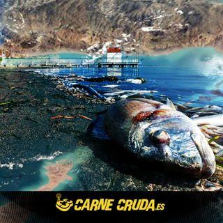 Mar Menor, mar muerto (CARNE CRUDA #914)