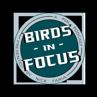 Birds in Focus VIII: Divided We Fall
