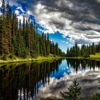 Senza foreste in salute niente acqua per città e agricoltura