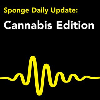 Sponge Daily Update:  Cannabis