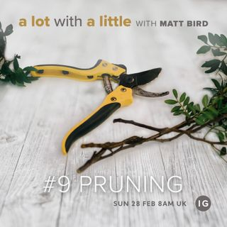 ALotWithALittle #9: PRUNING - growing through challenges and pain