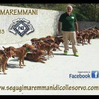 INTERVISTA SERGIO DE ANGELIS - ALLEVAMENTO SEGUGI MAREMMANI DI COLLE SORVO