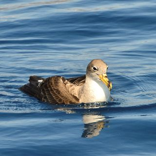 Contaminación lumínica y aves marinas en aguas canarias con SEO/Birdlife   Planeta Agua #02