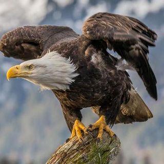 Eagles United Ministries Full Gospel Church