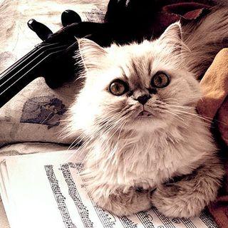 Gatos, gatitos y gatotes