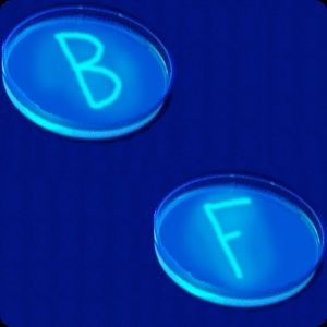 BacterioFiles Episode 6