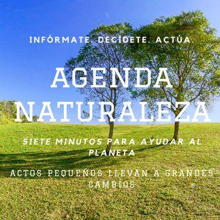 Agenda Naturaleza 6. Popotes de Mezcal.