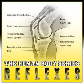 Reflexes (The Human Body Series)