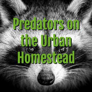 Predators On The Urban Homestead