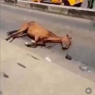 Episode 2 - Fainted Horse In Lagos