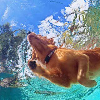 Terapia Acuatica o Hidroterapia en Animales