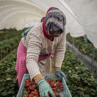 Senza lavoratori dal Marocco niente orticole, meloni, fragole e uva