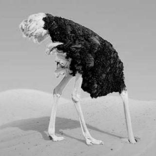 Bufale Bestiali - Curiosità (w/ Graziano Ciocca | Autore)