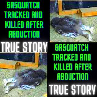 Sasquatch Tracked and Killed after Abduction TRUE STORY