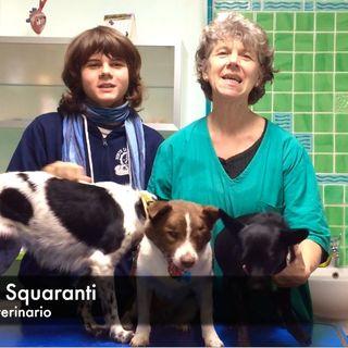 01 - Veterinaria Cristina Squaranti in live!